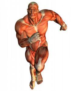 Schneller Laufen durch Krafttraining zeigt einen Bodybuilder als Beispiel dafür, dass man mit Muskeln schneller laufen kann