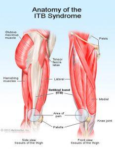 Anatomie des Läuferknie